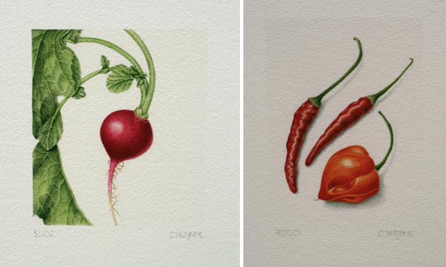 carrie megan botanical drawings and prints at page waterman fine framing